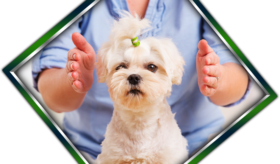 learn animal reiki for your companion pet